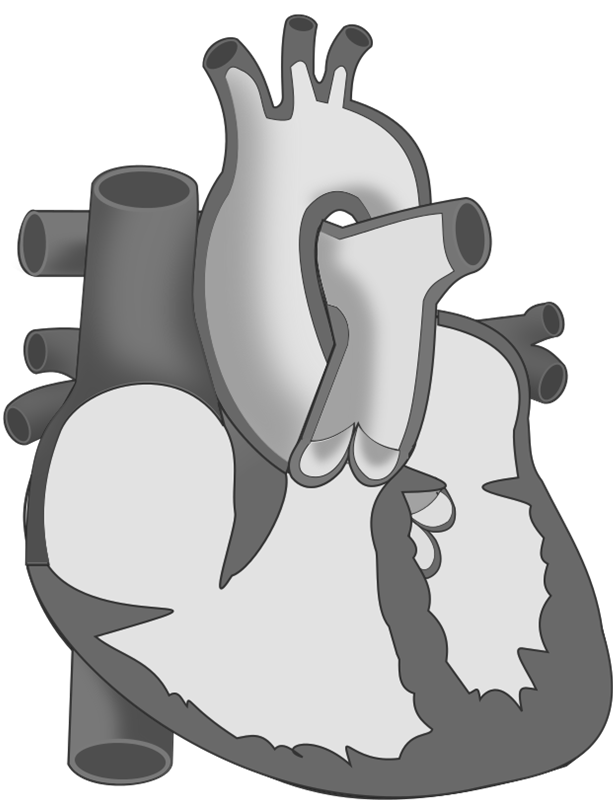 A black and white sketch of a heart