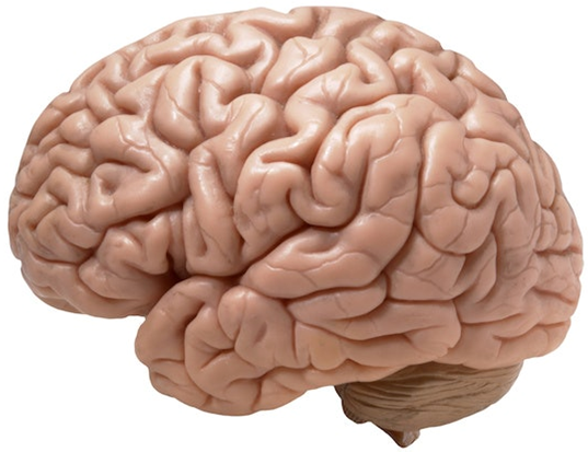 Picture of a brain